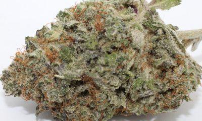 Purple Platinum Kush