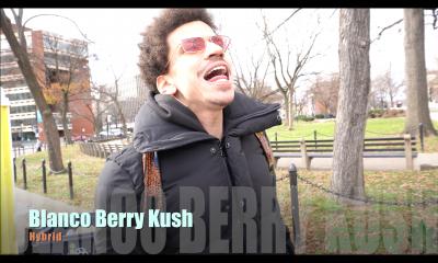 Blanco Berry Kush