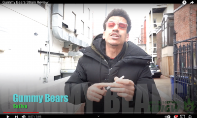 Gummy Bears Vid Pic