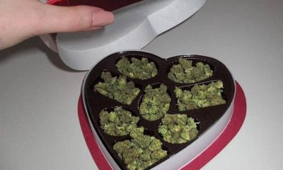 V-day for cannabis lovers