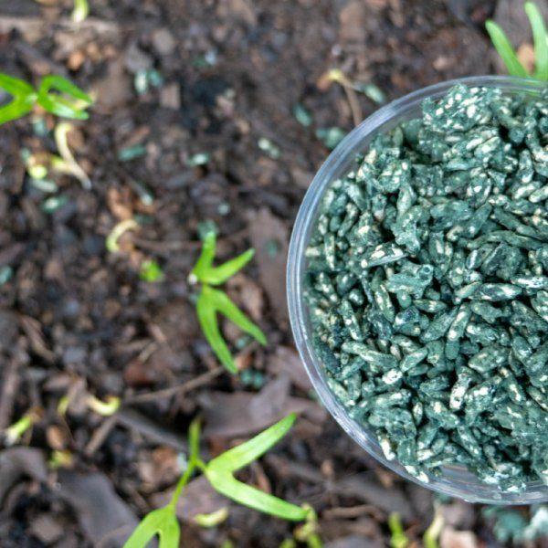 Organic Weed
